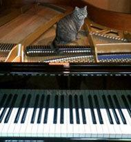 猫onピアノ03w190.jpg